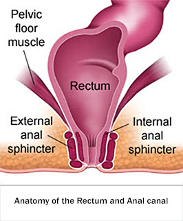 Anatomy of rectum anal canal
