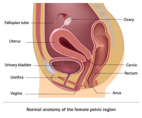 Sexual position and bladder prolapse